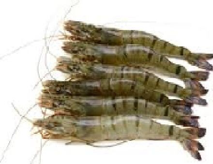 Tiger King Prawn (with head or head less block's)