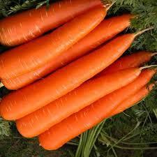High quality fresh carrots