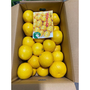 Tosa Buntanexport oranges brands fruit fresh with fresh clear refreshing flavor
