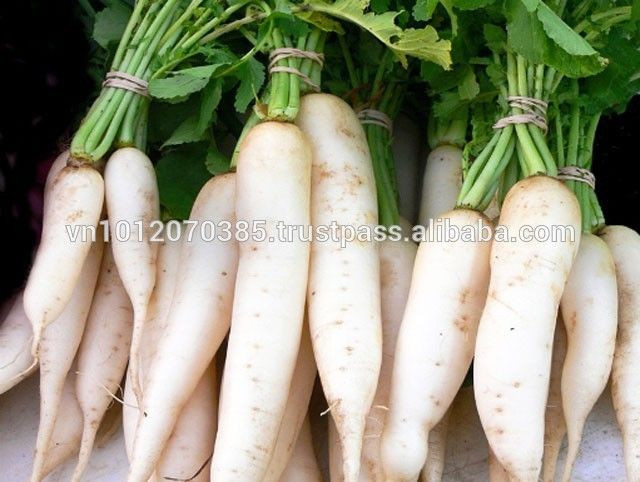 Vietnam High-Quality Fresh White Radish Wholesale