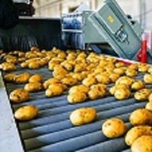 Potato set 6s Yanxuan potato wholesale