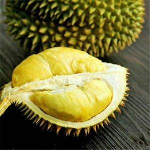 BEST QUALITY FRESH/FROZEN DURIAN FOR SALE