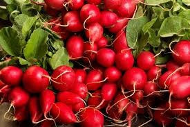 Premium quality FRESH RADISH/PEPPER/Garlics/GINGER/VEGETABLES SPICES AND HERBS CHEAP PRICE