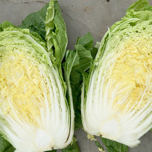 Wholesale fresh green round cabbage from new crop