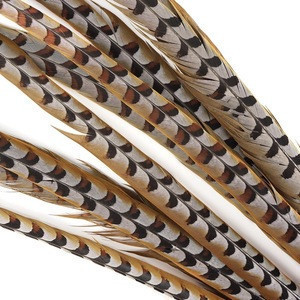 Lady Amherst Pheasant Tail Feathers /Lady Amherst Pheasant Tail Feather Long Dyed Pheasant Feathers