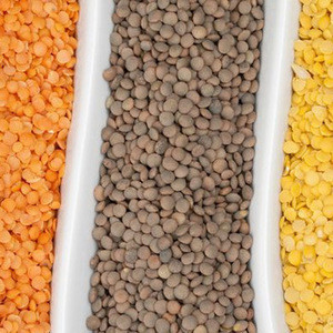 Wholesale and Split Organic Brown Lentils/ Red Lentils, Green Lentils, Yellow Lentils Beans/yellow pigeon peas Pulses