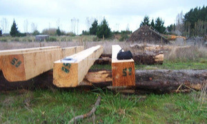 Beech square timber
