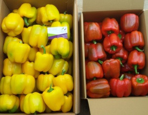 Fresh Bell Peppers/Color Capsicum/Exotic Vegetables!