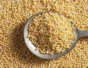 High Quality Standard Millet/Standard Fresh Arrival Red Millet Seeds at Wholesale Price