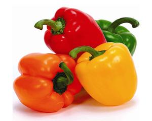 Fresh Green Bell Pepper / Fresh Capsicum