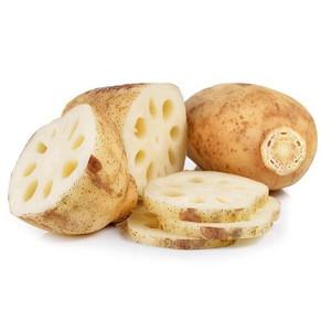 Fresh Vegetables White Lotus Root Export Price