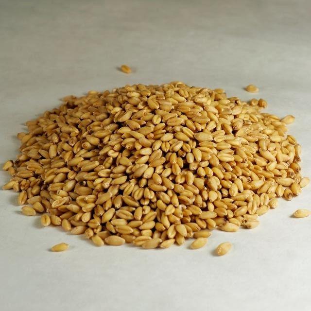 Barley Grains Premium Barley Seeds/Animal feed barley/bulk barley grains Malted Barley Malt grain for sale Top Grade