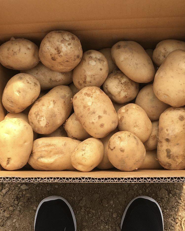 Farm Fresh Potato, Table Potato, Irish Potato +1(702)9079165
