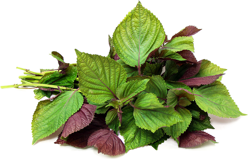 Fresh perilla/shiso leaves