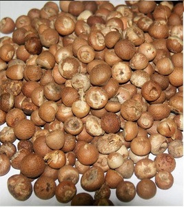 Best Quality Betel Nuts Thailand / BETEL NUT - ARECA NUTS / Quality whole and Split Betel Nut
