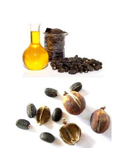 Vegetable Oil/UCO/Used Cooking Oil For Biodiesel / BEST Quality Crude Jatropha Oil