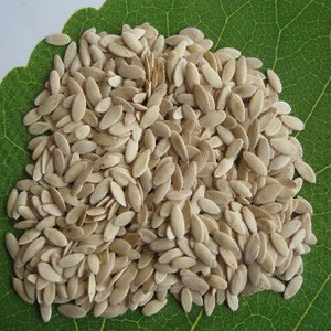 High quality cucumber seeds , hybrid cucumber seeds