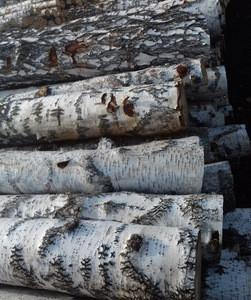 Russian Birch Wood Logs Timber