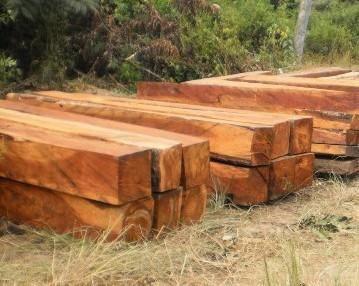 Hard Wood Timber, Lumber and Logs