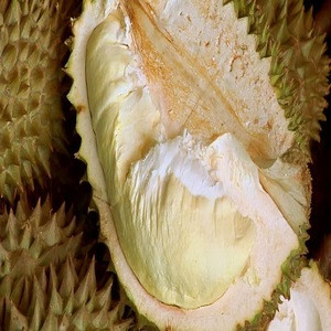 Fresh And Frozen Durian