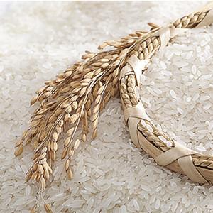 Organic Native Rice Starch 100% GMO free