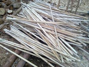 Vietnam wood log with cheap price