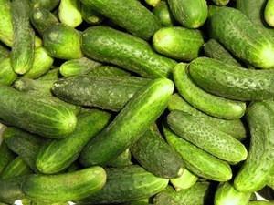 Cheap Fresh Cucumber For Sale