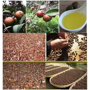 SCFE-CO2 Camellia Seed Oil for Skin care Hair Care
