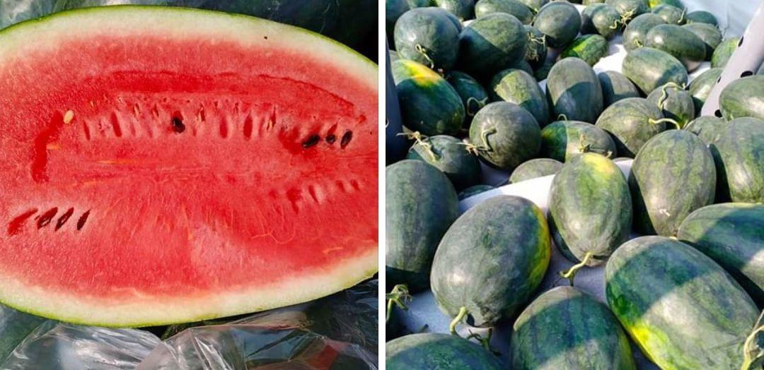 Watermelon Fresh Fruit (From Viet Nam)