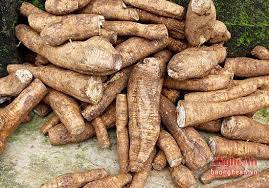 FRESH CASSAVA / CASSAVA TUBERS FROM VIETNAM for Wholesale