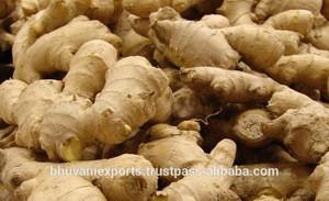 Ginger/Fresh Vegetables/Indian Ginger!