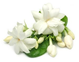 Wholesale Natural whitening moisturizing fresh organic jasmine hydrosol for skin care