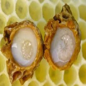 Best Royal Jelly PriceManufacturer Supply Fresh Royal Jelly for sale