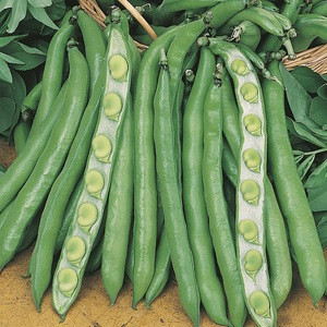 Manufacturer directly supply bulk fresh green broad beans for sales