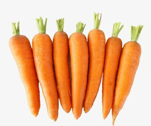 New crop fresh carrot specification for sale