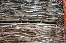 Donkey Hides, Cow Hides and Camel Hides/Skin