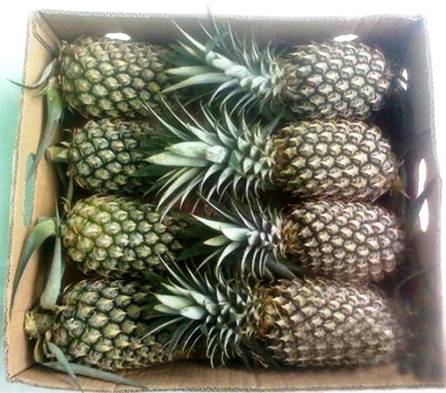 Wholesale Fresh Pineapple Price / Bulk Fresh Fruit Pineapple/Queen Pineapple
