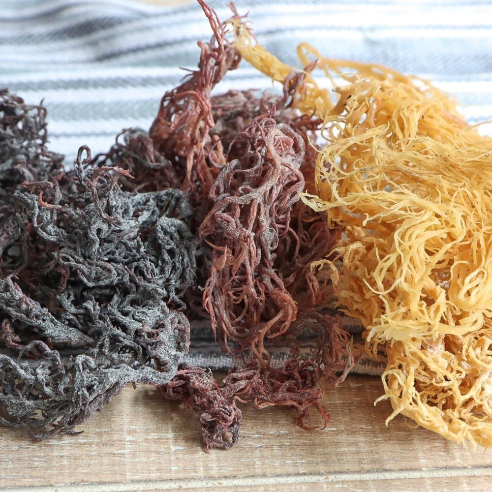 High Quality Purple Irish SeaMoss - Wildcrafted Sea Moss - Raw Dried Sea Moss No Salt/ Salt