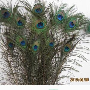 Long peacock feathers 50cm,60cm,70cm