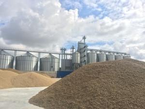 Organic rye
