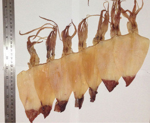 Dried Squid Skinless S size