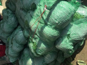 Fresh cabbage from China