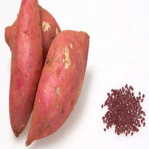 Sweet potato pop grain pellet from Korea