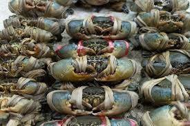 Live Mud Crab and Lobster