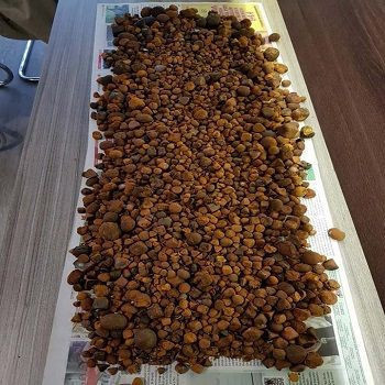 We Sell Quality 70-100% Whole Ox Gallstones