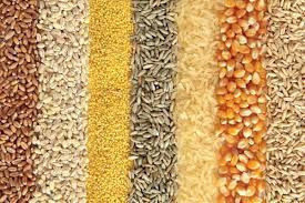 Grains (Rice, Barley, Oats, Wheat, Maize, Millet, Sorghum...etc)