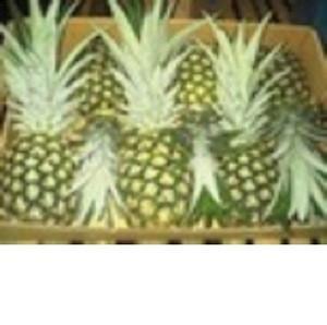 FRESH QUEEN PINEAPPLE ,fresh md2 pineapple
