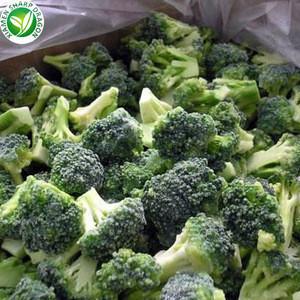 Wholesale organic iqf frozen fresh broccoli bulk