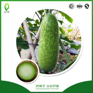 Helinong Seeds hairy melon seeds price