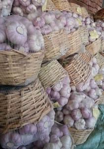 White Common Garlic / Fresh EGYPTIAN Garlic / Big Size Garlic